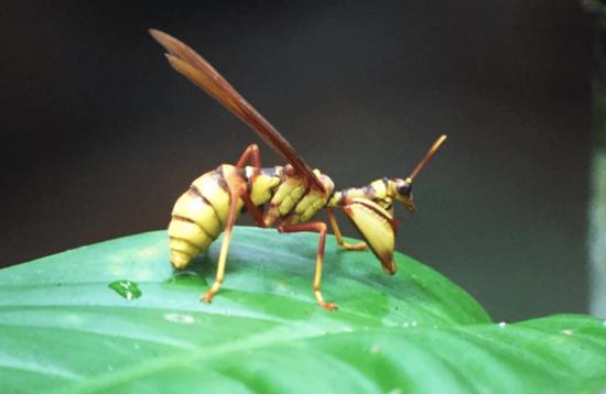 Jungle Bug Experience