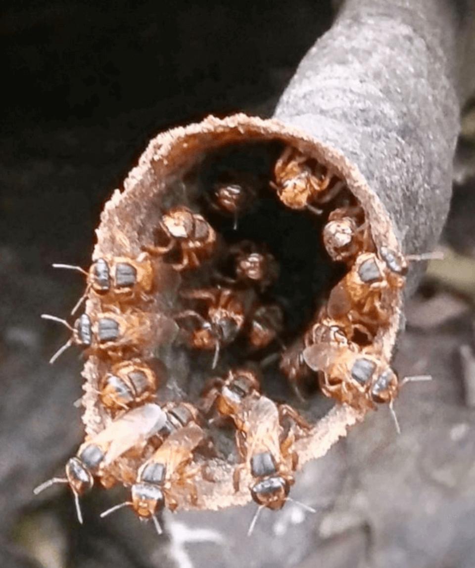 Native Bees Tour