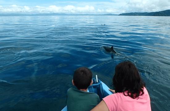 dolphin-tour