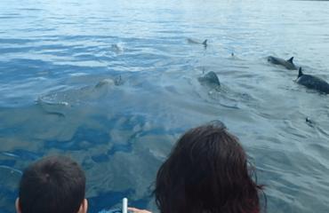 Marine life tour